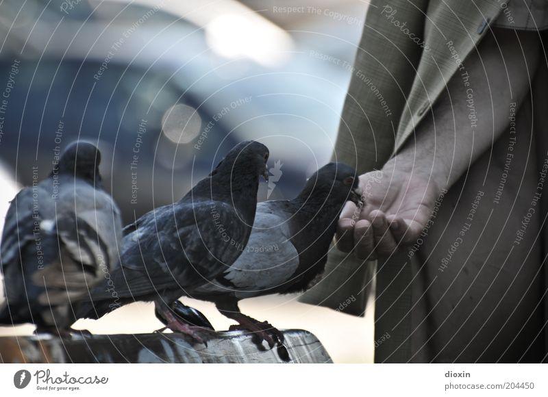 Der alte Mann und die Tauben Mensch Männlicher Senior Arme Hand 1 Tier Flügel 3 Tiergruppe Fressen füttern blau braun grau Vertrauen Tierliebe Natur Stadt
