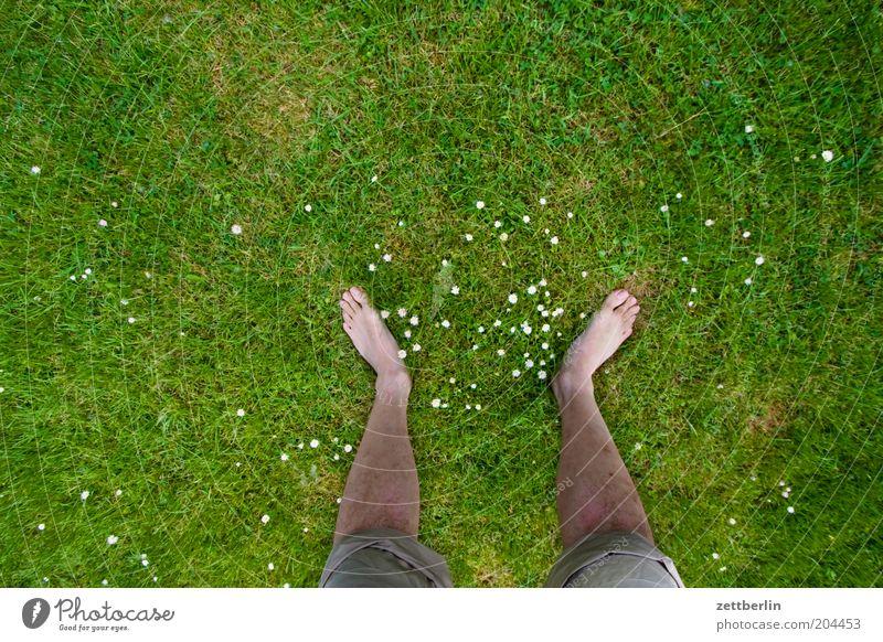 Unterpächter Sommer Beine Fuß Pflanze Frühling Gras Wiese stehen Wachstum standhaft Juni Schienbein Zehen Körperteile Stabilität Männerbein Barfuß Rasen