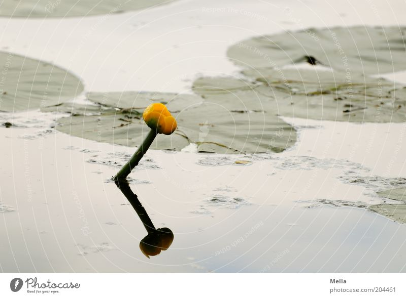Stille(r) See Natur Wasser Blume Pflanze Sommer ruhig Blatt Blüte Frühling Stimmung Umwelt nass Wachstum natürlich Idylle