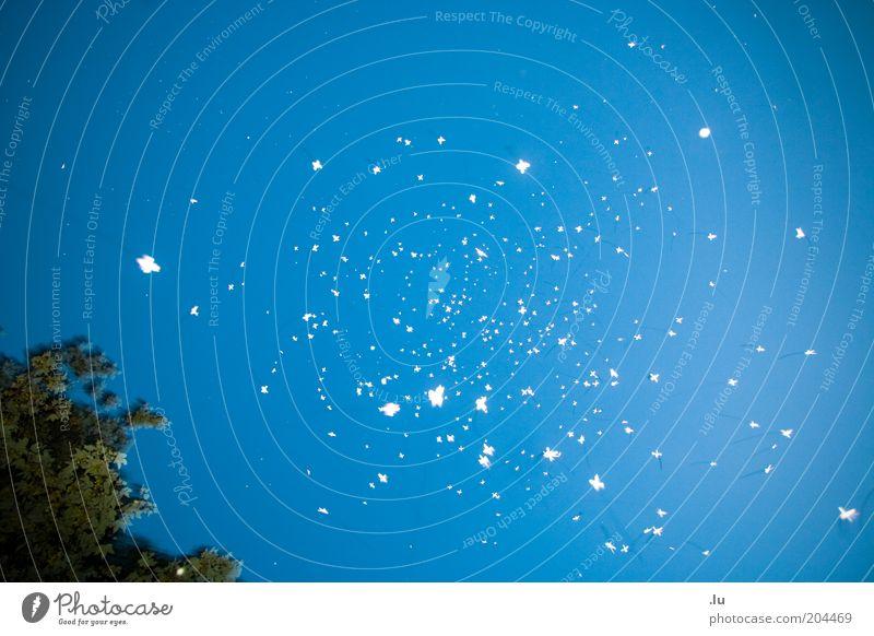 Für jemanden schwärmen blau Stern Stern (Symbol) Punkt Dinge Symbole & Metaphern chaotisch Nacht Schweben UFO diffus Schwarm Licht abstrakt Himmelskörper & Weltall Galaxie