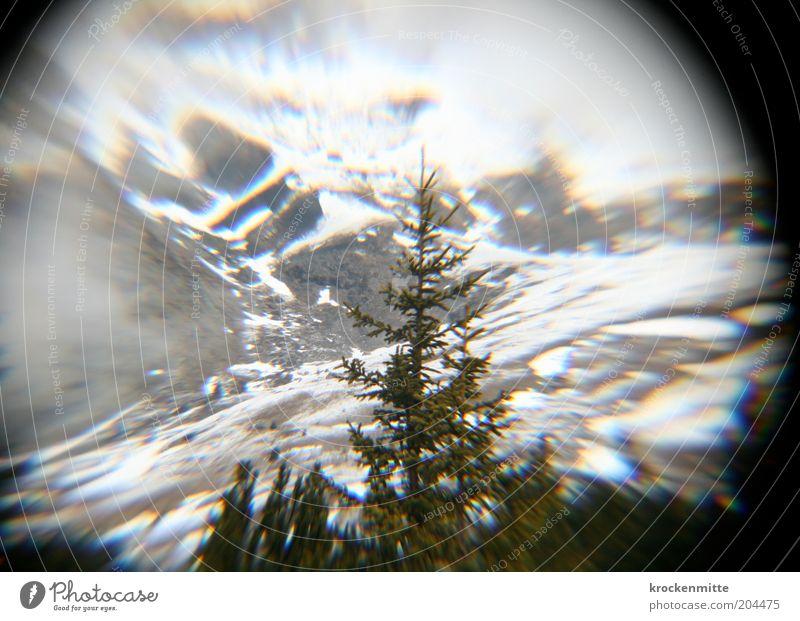 O Tannenbaum Umwelt Natur Landschaft Winter Baum Hügel Felsen Alpen Berge u. Gebirge Schneebedeckte Gipfel grün weiß Glaskugel rund Kreis Alm Alp Flix Schweiz