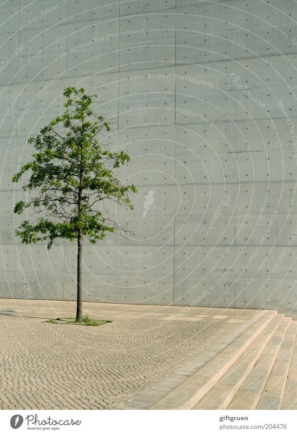 city slicker Baum Stadt Pflanze Einsamkeit Wand grau Mauer Gebäude Architektur Beton Fassade Perspektive Treppe modern Wachstum einfach