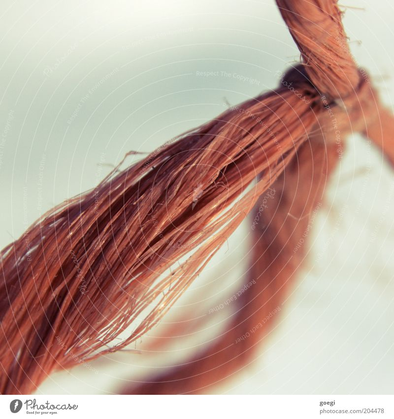 knot Schnur Seil Kunststoff Knoten Schleife rot Stress Zusammenhalt Farbfoto Außenaufnahme Detailaufnahme Menschenleer Textfreiraum links Textfreiraum oben