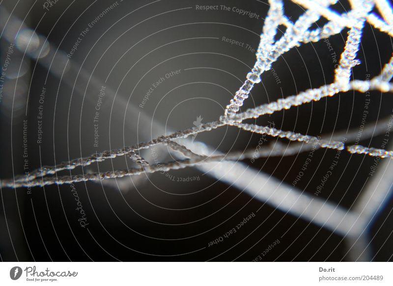 immer etwas verwirrend - so´n neues update... Natur Wassertropfen Winter Regen Eis Frost kalt grau dunkel Spinnennetz Netzwerk Vernetzung Reflexion & Spiegelung
