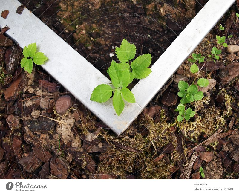Subkultur grün Pflanze Blatt grau Metall braun Ordnung Wachstum Schutz Grenze Trennung Moos silber eckig Ausgrenzung Grünpflanze