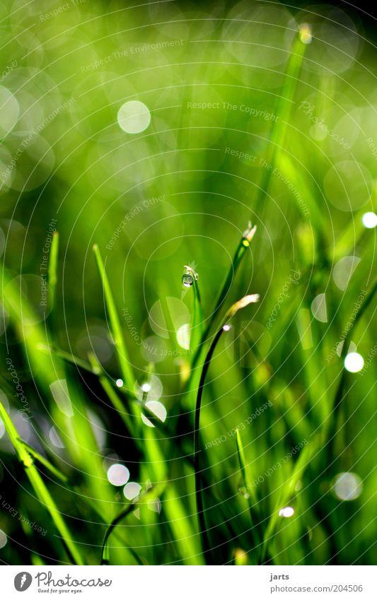 green day Umwelt Natur Wassertropfen Frühling Sommer Pflanze Gras frisch natürlich grün Tau Farbfoto Außenaufnahme Nahaufnahme Detailaufnahme Menschenleer