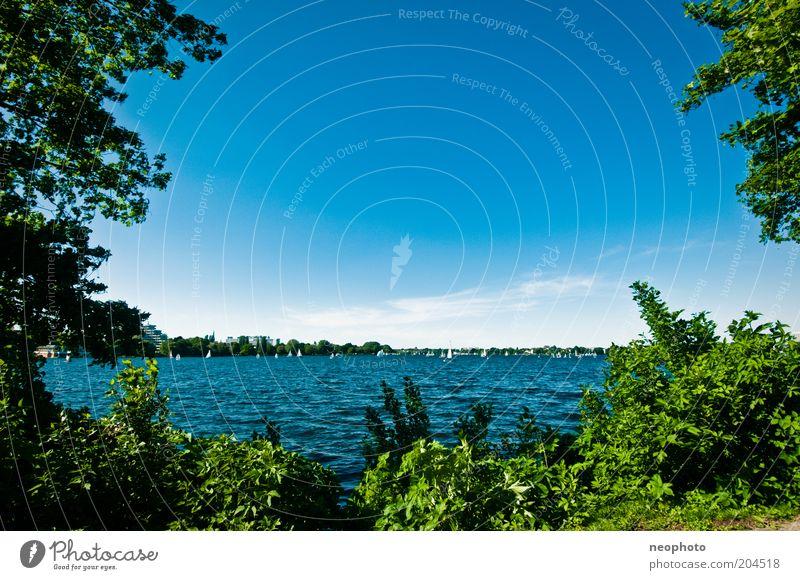 Sommeranfang grün blau Erholung Frühling See Hamburg Ausflug Tourismus Alster Segeln Schönes Wetter Segelboot Blauer Himmel Sightseeing Sehenswürdigkeit