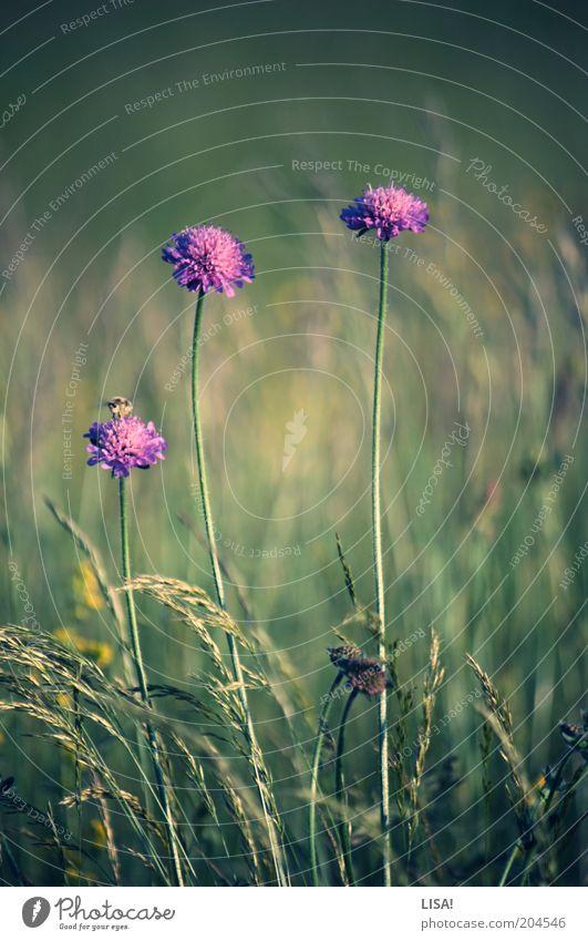 zu viert Natur Blume grün Pflanze Sommer Tier Blüte Gras rosa Umwelt Erde violett Stengel Biene Wildtier Grünpflanze