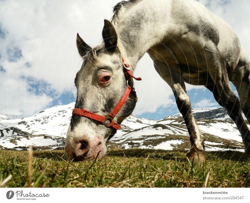 Das Auge isst mit Natur Himmel grün rot Wolken Auge Ernährung Tier Wiese Gras Berge u. Gebirge Frühling Landschaft Pferd Ohr Tiergesicht