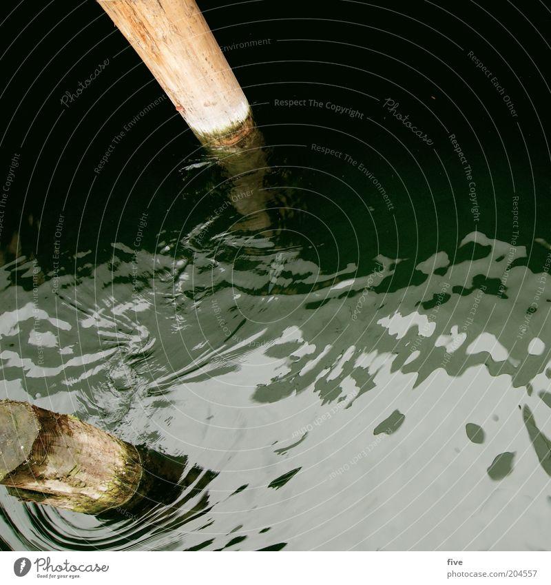 zwischen den pfosten Natur Wasser Holz See Umwelt nass Baumstamm Pfosten Pflanze Baum Wasseroberfläche Poller