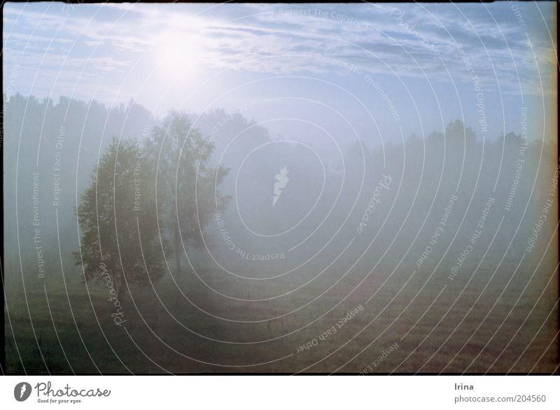 Towards Belarus Natur blau Baum Ferien & Urlaub & Reisen hell Reisefotografie Idylle Sonnenaufgang Abenddämmerung Polen Nationalpark Sonnenstrahlen Bialowieza