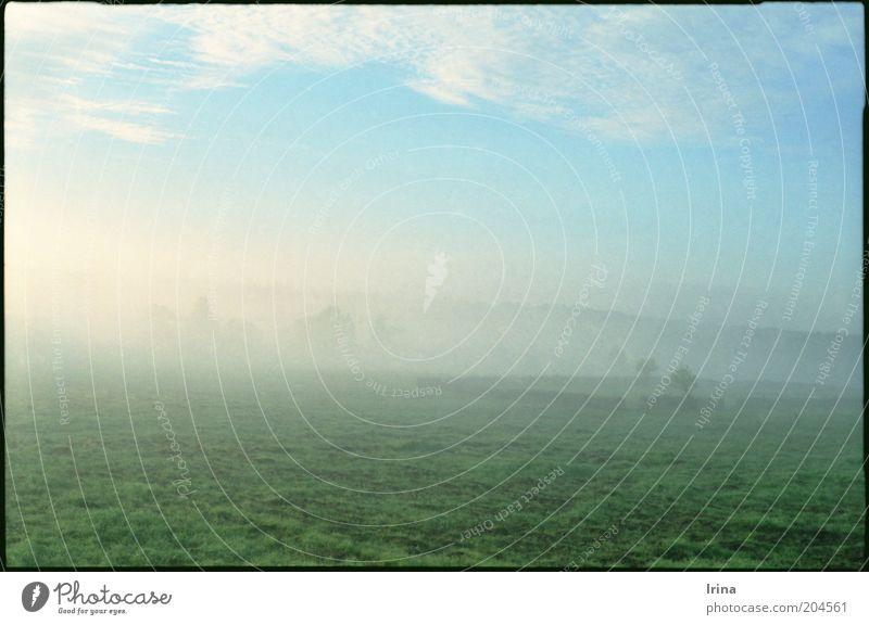Towards Bialowieza Landschaft Polen Ferien & Urlaub & Reisen ruhig Unendlichkeit Wiese Nebel Weide Grünfläche Dunst Nationalpark Natur Textfreiraum unten