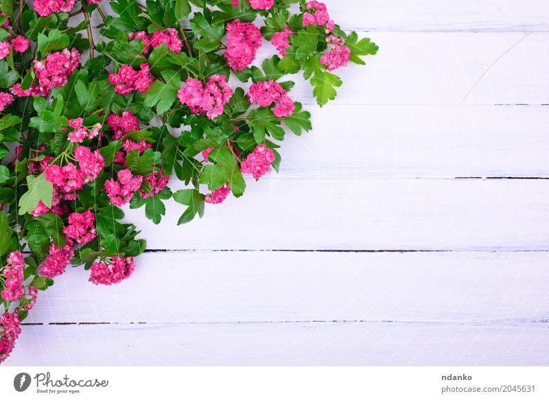 blumenstrau aus rosa nelken mit einem papieranh nger ein lizenzfreies stock foto von photocase. Black Bedroom Furniture Sets. Home Design Ideas