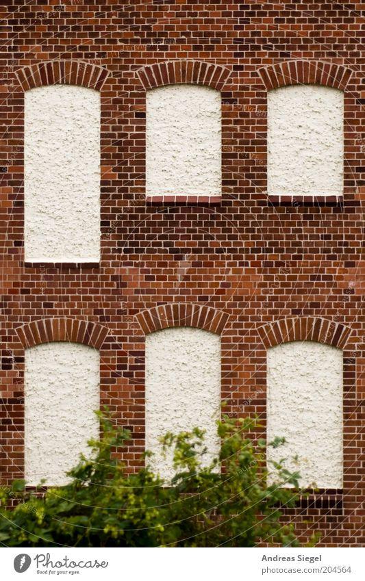 Fenster ohne Aussicht Pflanze Sträucher Grünpflanze Haus Gebäude Architektur Mauer Wand Fassade Backsteinfassade Stein trist braun weiß verputzt Farbfoto