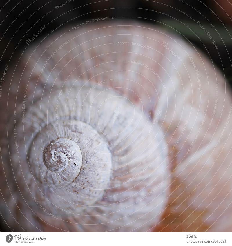 Urform Umwelt Natur Schnecke Schneckenhaus Zeichen Spirale rund braun weiß Präzision Symmetrie harmonisch Strukturen & Formen Geometrie Ursprung Naturgesetz