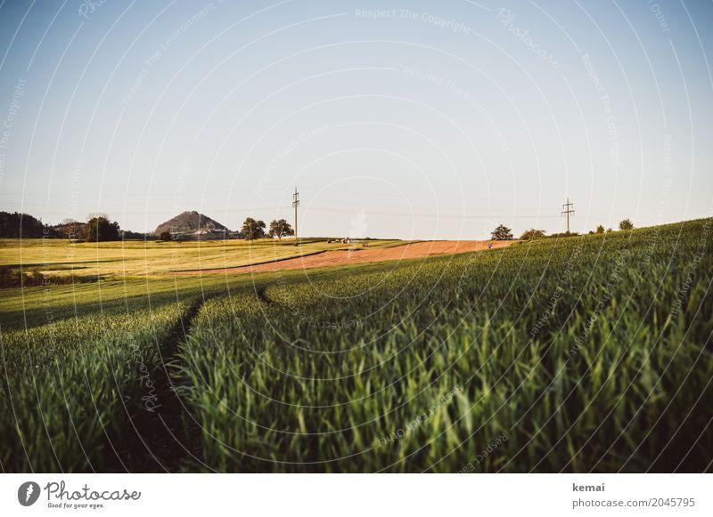 Spuren im Feld Ferien & Urlaub & Reisen Pflanze Sommer grün Landschaft Erholung ruhig Ferne Wärme Umwelt Wege & Pfade Freiheit Ausflug Freizeit & Hobby