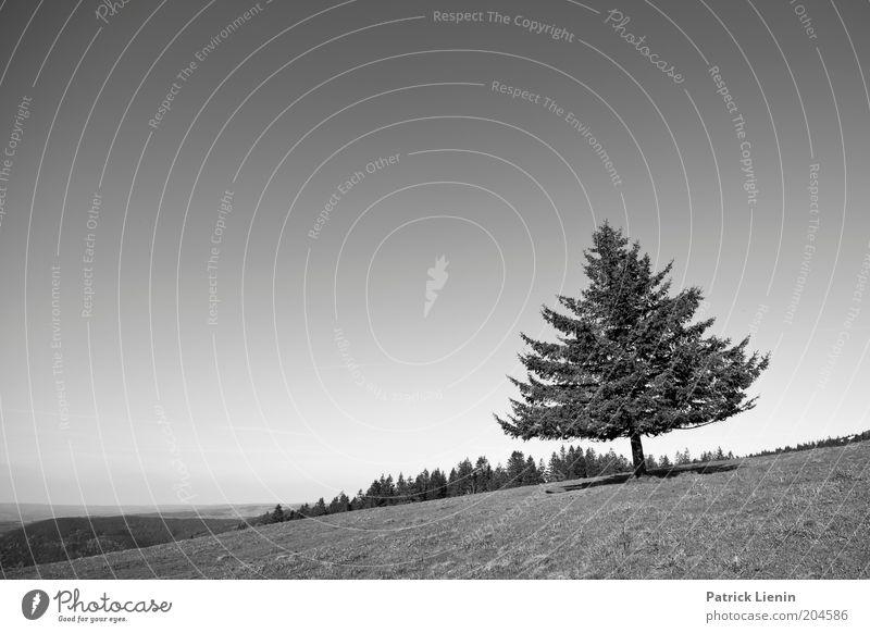 schräg Umwelt Natur Landschaft Pflanze Urelemente Luft Himmel Wolkenloser Himmel Wetter Wind Baum Blick Nadelbaum Schwarzwald Sehnsucht Aussicht Reisefotografie
