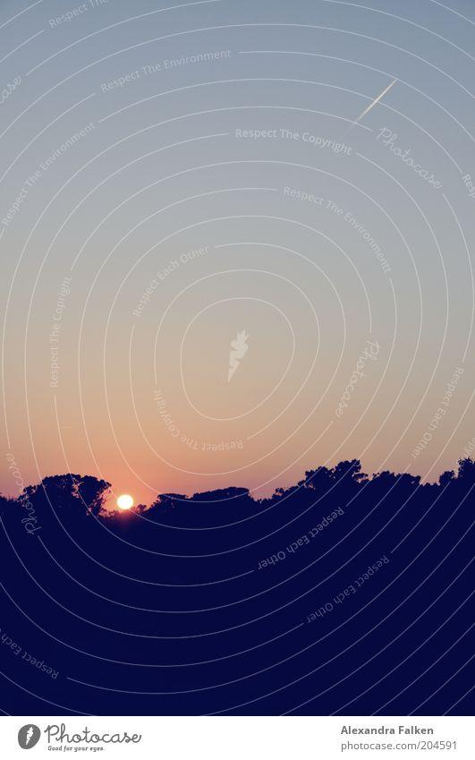 Sonne geht in Wald unter. Umwelt Natur Landschaft Luft Himmel Wolkenloser Himmel Sonnenaufgang Sonnenuntergang Sonnenlicht Klima Wetter Schönes Wetter Ferne