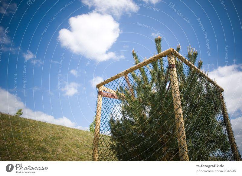 Weihnachtsbaum-Einzelhaft Himmel weiß Baum grün blau Wolken Gras Umwelt verrückt Wachstum Weihnachtsbaum Schutz außergewöhnlich Tanne Zaun Schönes Wetter