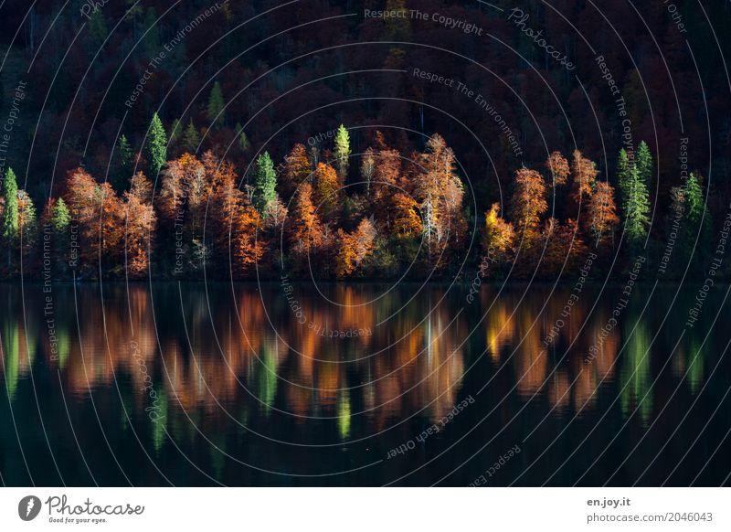 Multi Kulti Ferien & Urlaub & Reisen Natur Landschaft Herbst Wald Seeufer Königssee ruhig Einsamkeit Erholung Hoffnung Idylle Klima Religion & Glaube Symmetrie