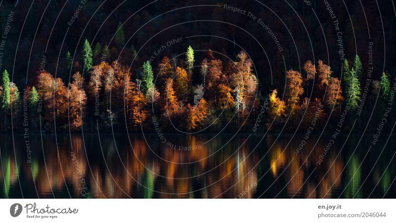 bunt gemischt Umwelt Natur Landschaft Pflanze Sonnenlicht Herbst Schönes Wetter Wald Seeufer ruhig Traurigkeit Sorge Trauer Tod Idylle Klima