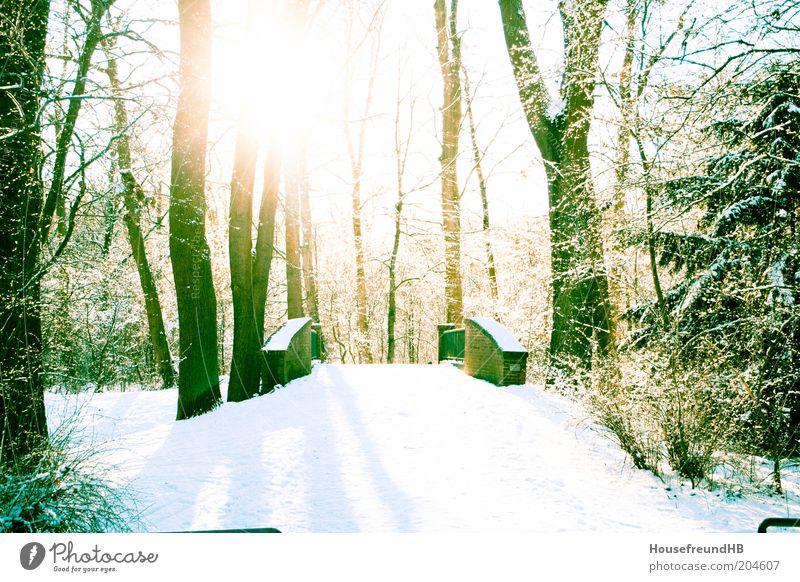 Puente. Umwelt Natur Winter Schönes Wetter Schnee Park Erholung Farbfoto Menschenleer Gegenlicht Sonne Sonnenlicht Sonnenstrahlen Brücke Fußweg Spazierweg