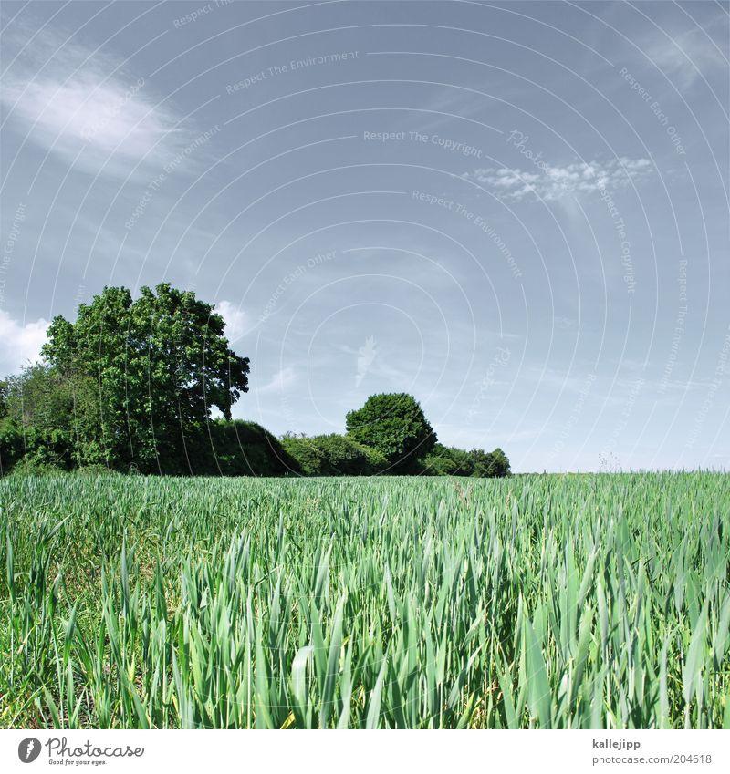 grüner wirds nicht Wirtschaft Umwelt Natur Landschaft Pflanze Himmel Wolken Horizont Frühling Sommer Klima Wetter Schönes Wetter Baum Gras Nutzpflanze Feld