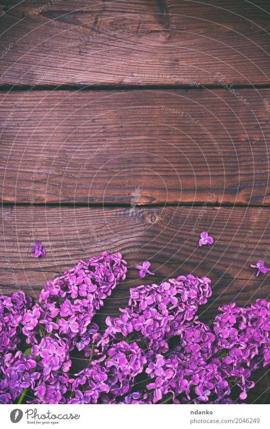 Bouquet von lila Flieder Valentinstag Pflanze Blume Blatt Blüte Blumenstrauß Holz frisch natürlich braun Farbe Überstrahlung Blütenknospen geblümt Frühling
