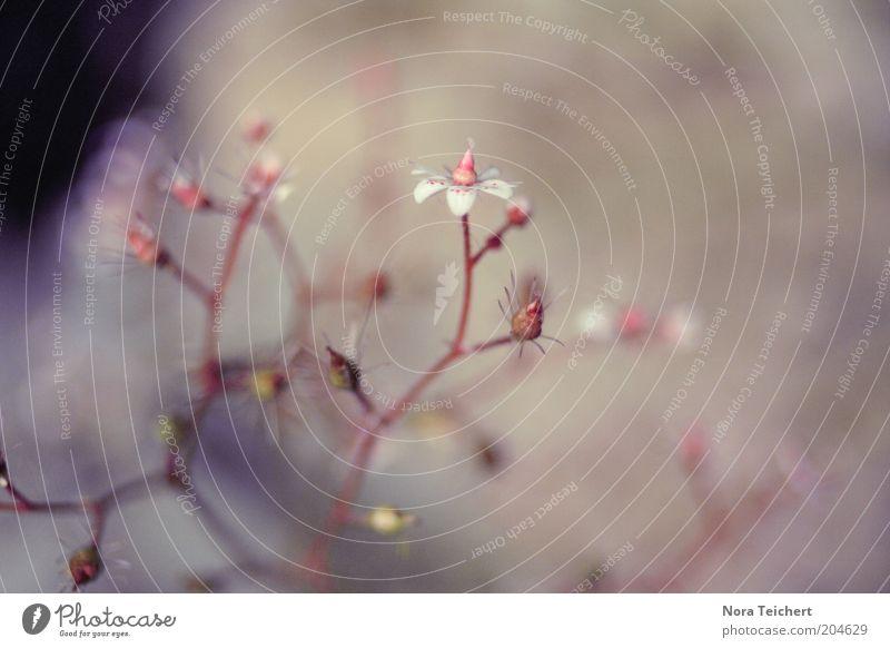 Pflanzenwelten Natur schön Blume Sommer Gefühle Blüte Frühling rosa Umwelt ästhetisch Wachstum Sträucher violett zart Stengel