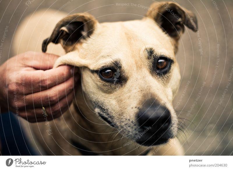 Pullover Freizeit & Hobby Spielen Hand Tier Haustier Hund Tiergesicht 1 berühren Blick außergewöhnlich Freundlichkeit einzigartig kuschlig natürlich positiv