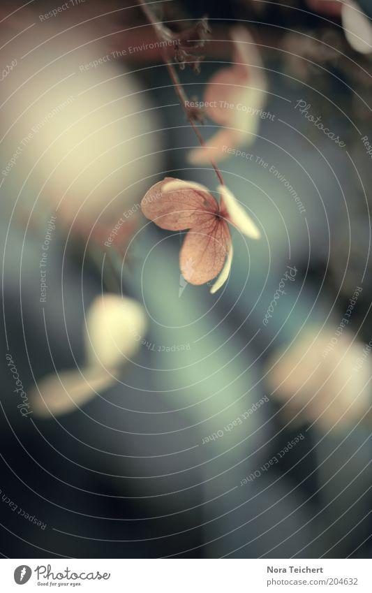 im Gebüsch. Natur Pflanze ruhig Blatt dunkel Blüte Umwelt Sträucher trocken hängen Zweig vertrocknet Makroaufnahme Licht Schatten Unschärfe