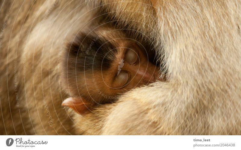Mutterliebe Tier ruhig Tierjunges Liebe Gefühle Stimmung Zusammensein Warmherzigkeit Schutz Sicherheit Vertrauen Fell Geborgenheit Tiergesicht Zoo