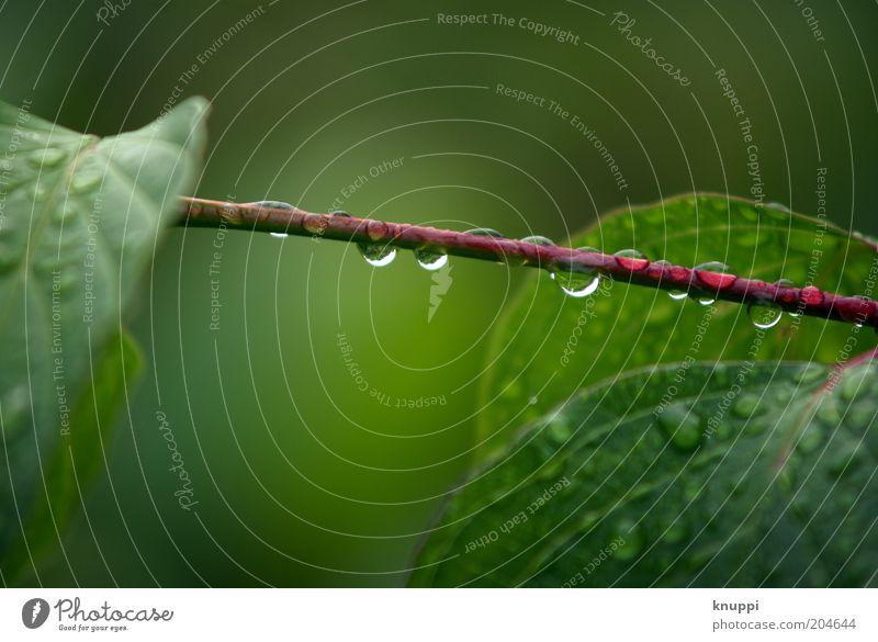after the rain Natur Wasser grün Pflanze rot Sommer ruhig Blatt Erholung Regen Umwelt Wassertropfen nass Sträucher Tropfen