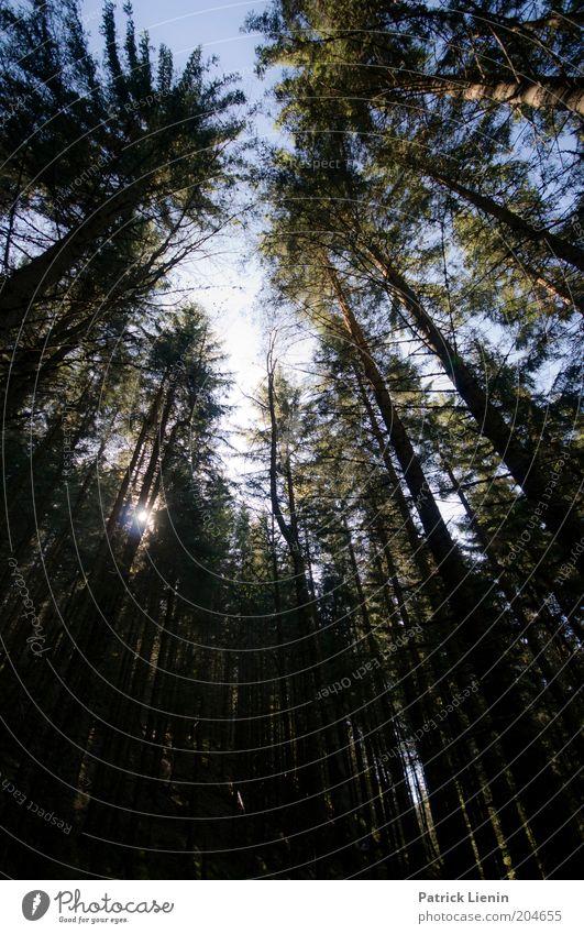 core of nature Natur Himmel Baum Sonne Pflanze Ferien & Urlaub & Reisen Wald dunkel oben träumen Landschaft Luft Umwelt Ausflug bedrohlich Klima