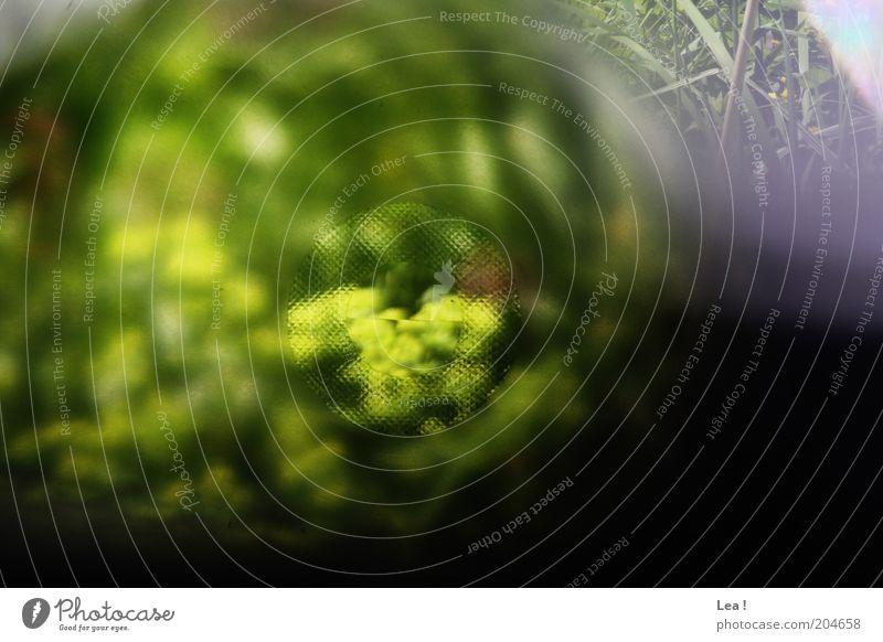 Durchblick Natur Pflanze Fotokamera frisch Farbe analog Sucher Farbfoto Außenaufnahme Menschenleer Tag Unschärfe