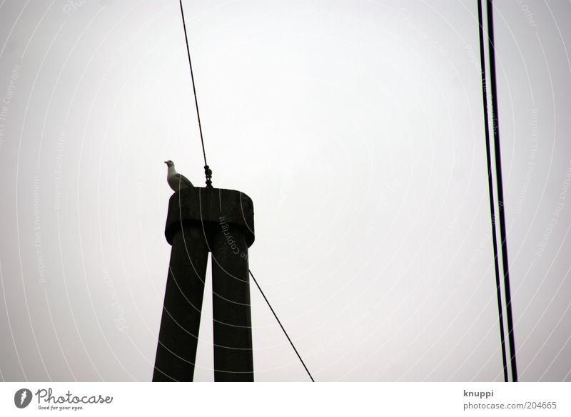 have a break... Natur Himmel weiß ruhig schwarz Tier grau Luft Linie Vogel Metall warten Pause Kabel Telekommunikation Wildtier