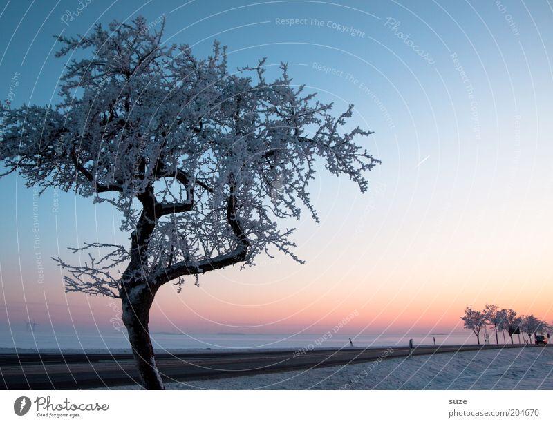 Heimweg Umwelt Natur Landschaft Urelemente Himmel Wolkenloser Himmel Horizont Winter Klima Nebel Eis Frost Schnee Baum Verkehr Verkehrswege Straßenverkehr