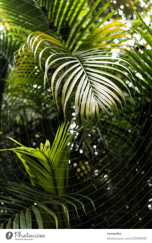 Grafiken und Texturen - Tropisches Gefühl Lifestyle Reichtum elegant Stil Design exotisch Gesundheit Wellness Leben harmonisch Wohlgefühl Sinnesorgane Erholung