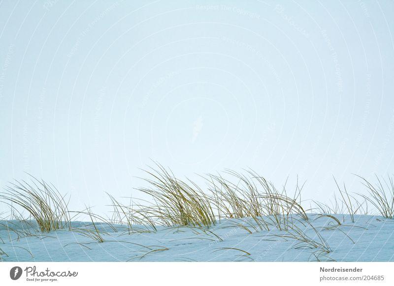 Dünengras Ferien & Urlaub & Reisen Ausflug Winter Schnee Winterurlaub Natur Landschaft Luft Himmel Eis Frost Gras Küste Ostsee Meer kalt Einsamkeit stagnierend