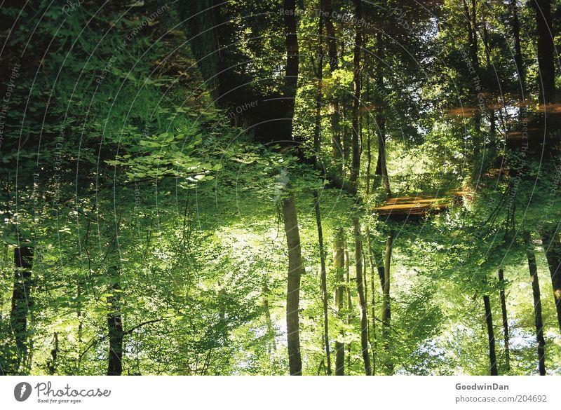 wo lang? da lang! V Natur Wasser schön Wald Wärme Luft Wetter Umwelt authentisch außergewöhnlich Schönes Wetter Bach Dämmerung Morgendämmerung Reflexion & Spiegelung Wasserspiegelung