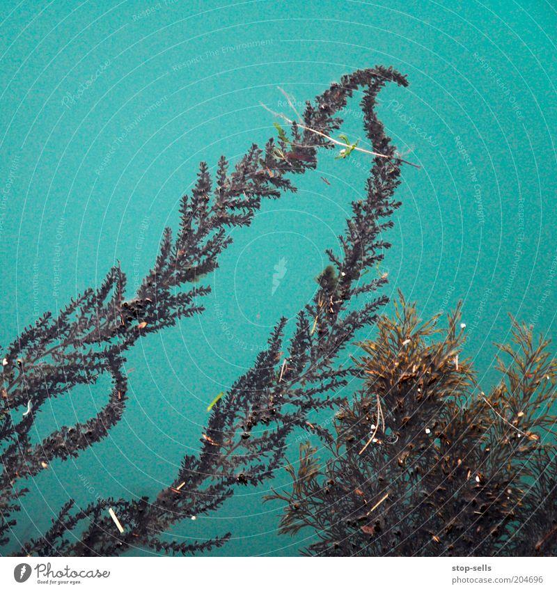 Letalis Natur Wasser Farn Grünpflanze Teich türkis Wasserpflanze Farbfoto Vogelperspektive Außenaufnahme Menschenleer Textfreiraum oben Textfreiraum links
