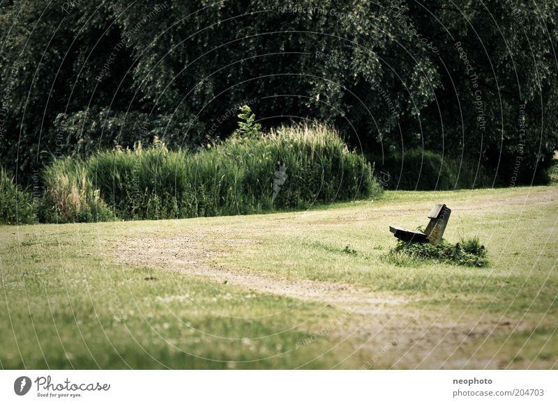 Weg zur Entspannung Natur Baum grün ruhig Wiese Gras Garten Wege & Pfade Park Rasen Bank Romantik Sträucher harmonisch Parkbank