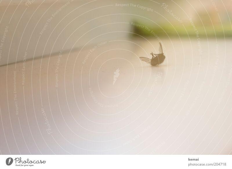 Abgestürzt Totes Tier Fliege Flügel 1 liegen schwarz weiß Tod Farbfoto Gedeckte Farben Innenaufnahme Textfreiraum links Textfreiraum unten Tag Unschärfe