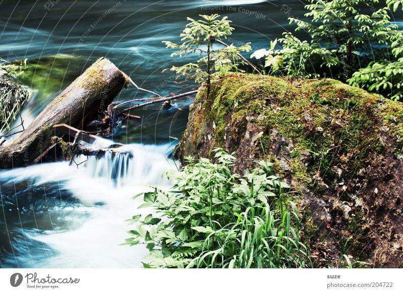 Wasserlauf Umwelt Natur Landschaft Pflanze Sträucher Felsen Flussufer Bach Wasserfall authentisch nass natürlich schön Wachstum Triebtal fließen Farbfoto
