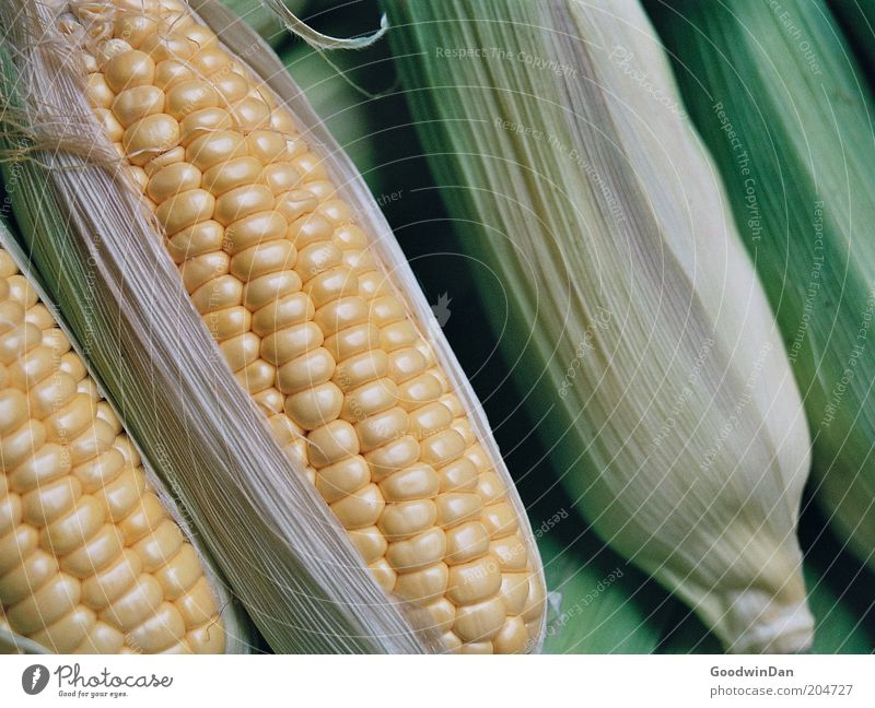Analoger Mais Lebensmittel Gemüse Ernährung authentisch frisch nah Farbfoto Innenaufnahme Menschenleer Schwache Tiefenschärfe Maiskolben