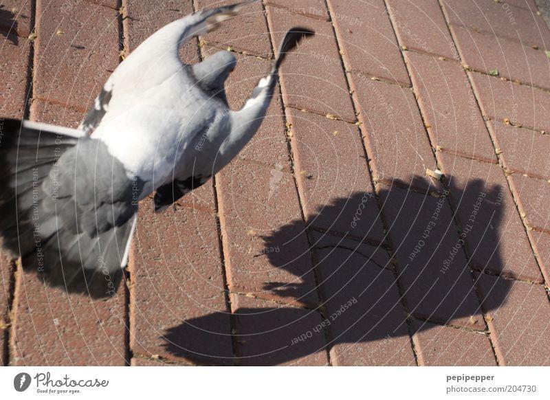 Taubenschlag Tier Vogel 1 Stein grau rosa silber Farbfoto mehrfarbig Außenaufnahme Tag Schatten Kontrast Vogelperspektive fliegen Steinboden Bodenplatten