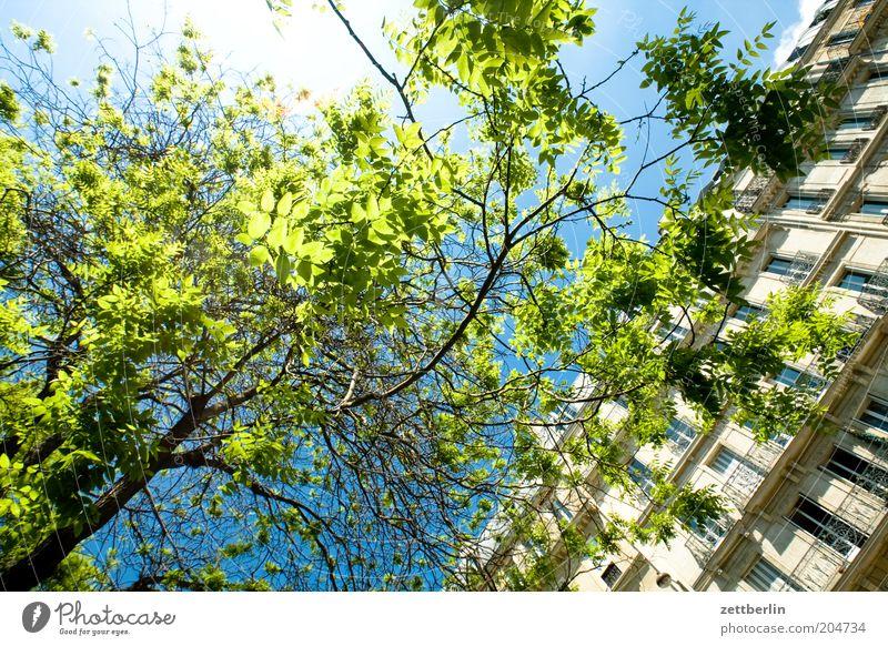 Auf der Suche nach dem Pantheon Baum Ast Zweig Blatt Blattgrün Haus Fenster Fensterfront Stadthaus Himmel Sonne Gegenlicht blenden Sommer Frühling strahlend