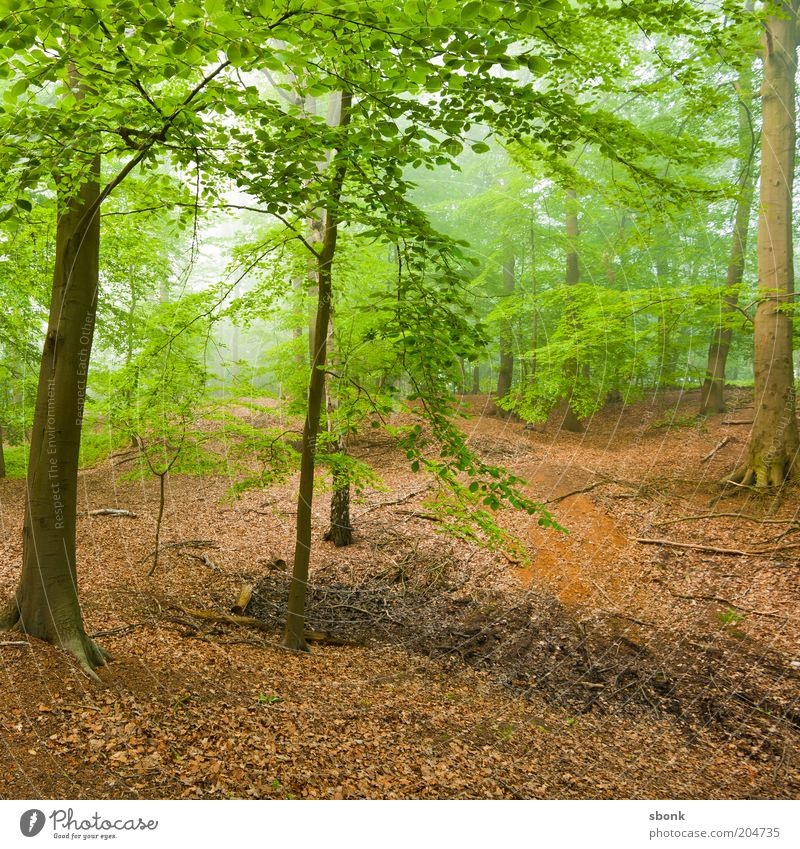 Entdeckung Umwelt Natur Landschaft Pflanze Klima Wetter Nebel Baum Grünpflanze Wald Urwald Idylle Laubwald Laubbaum ruhig Farbfoto Morgen Tag Luft Hügel
