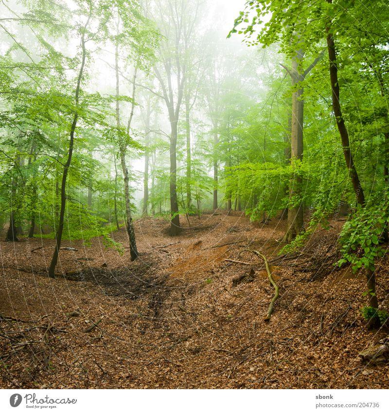 Konzentration Umwelt Natur Landschaft Pflanze Sommer Klima Nebel Baum Wald Urwald ruhig Laubwald Laubbaum Farbfoto Außenaufnahme Morgen Tag Licht Sonnenlicht