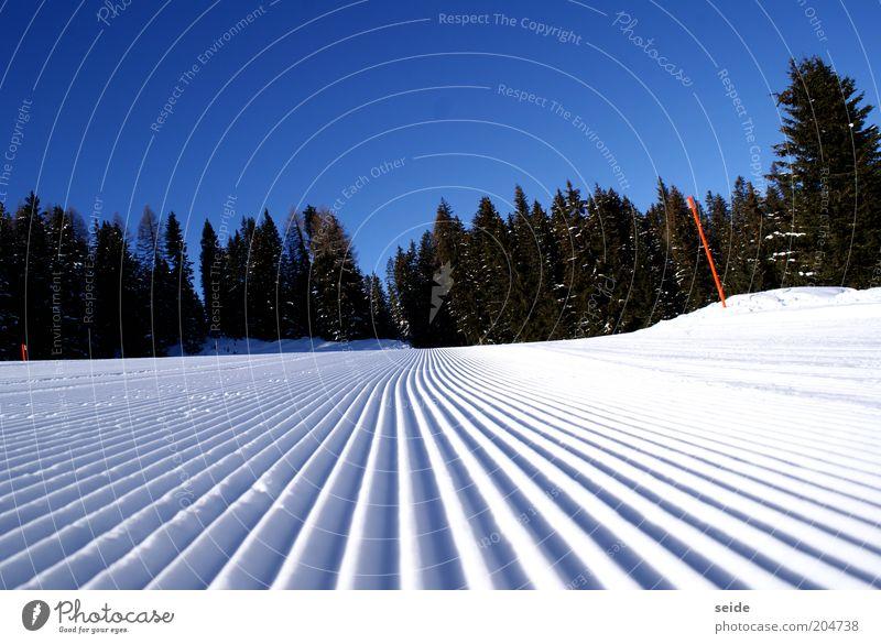 morgenstund hat frische pisten im mund Natur weiß schön blau Freude Winter ruhig schwarz kalt Schnee Freiheit Berge u. Gebirge Landschaft Eis nass hoch